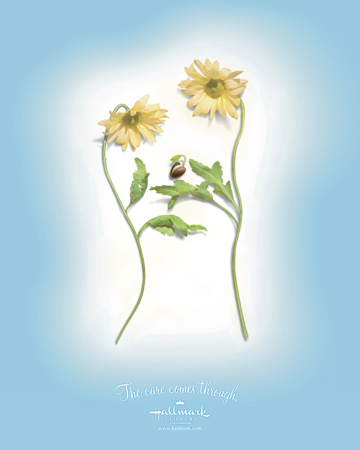Print ads art direction copywriting steve ingkavet Hallmark flowers